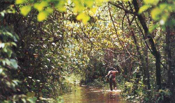 Tupi man hunting in the Amazon
