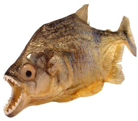 Piranha mounts