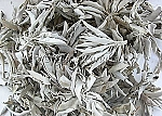 1 lb. California White Sage Smudge Leaves and Clusters